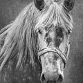 Portrait Of A Horse by Tom Mc Nemar