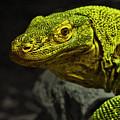 Portrait Of A Komodo Dragon by Jim Fitzpatrick