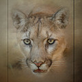Portrait Of A Mountain Lion by Teresa Wilson