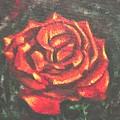 Portrait Of A Rose 2 by Usha Shantharam