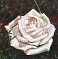 Portrait Of A Rose 3 by Usha Shantharam
