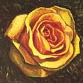 Portrait Of A Rose 5 by Usha Shantharam