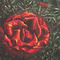 Portrait Of A Rose 6 by Usha Shantharam