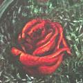 Portrait Of A Rose by Usha Shantharam