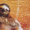 Portrait Of A Sloth Pet Looking In The Camera by Srdjan Kirtic