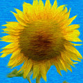 Portrait Of A Sunflower by Jeffrey Kolker