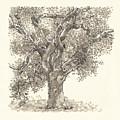 Oak by Judith Kunzle