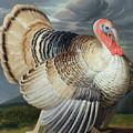 Portrait Of A Turkey  by Johann Wenceslaus Peter Wenzal