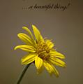 Portrait Of A Wildflower 3 by Devane Mattoni