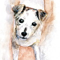Portrait Of Abby - Jack Russell Terrier by Marilyn Barton
