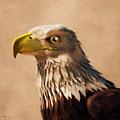 Portrait Of An Eagle by Daniel Eskridge