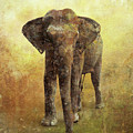 Portrait Of An Elephant Digital Painting With Detailed Texture by Lucy Baldwin