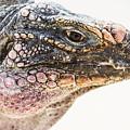 Portrait Of Iguana by Pier Giorgio Mariani