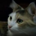 Portrait Of Miss Kitty by Emily Kelley
