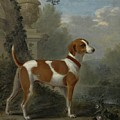 Portrait Of The Duke Of Hamilton Hound by John Wootton