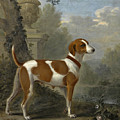Portrait Of The Duke Of Hamilton's Hound Jewell by John Wootton
