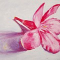 Portrait Of The Kaneri Flower. Oleander by Usha Shantharam
