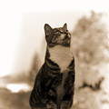 Posing Cat by Pamela Walton