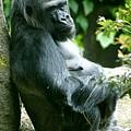 Posing Gorilla by Sonja Anderson
