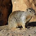 Posing Squirrel by Magnus Haellquist