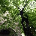 Positano Arch by Rhoda Gerig