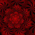Positively Red by Barbara A Lane