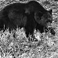 Post Hibernation Binge Black And White by Adam Jewell