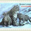 Postage Stamp - Snow Leopard By Kaye Menner by Kaye Menner