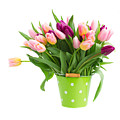 Pot Of Pink And Violet Tulips by Anastasy Yarmolovich