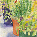Potted Beauties  by Vicki  Housel