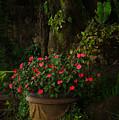 Potted Flowers by Nancy Scofield