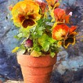 Potted Pansy Pencil by Edward Fielding
