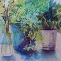 Potted Plant Study by Julie Morrison