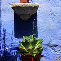 Potted Plants Against A Blue Painted Wall  by Aidan Moran