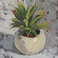 Potted Succulent I by Haze Long