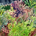 Potted Succulents by Donald Maier