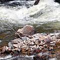 Poudre River 5 by Linda Benoit