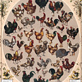 Poultry Of The World Poster by American School