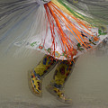 Pow Wow Shawl Dancer 4 by Bob Christopher