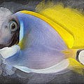 Powder Blue Tang No 01 by Maria Astedt