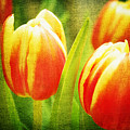 Power Of Spring by Angela Doelling AD DESIGN Photo and PhotoArt