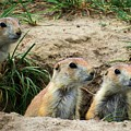 Prairie Dog Family by Connor Beekman