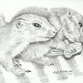 Prairie Dogs by Susan Bromlow