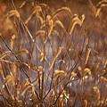 Prairie Grass Blades by Steve Gadomski