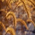 Prairie Grass Detail by Steve Gadomski