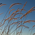 Prairie Grass Landscape by Steve Gadomski