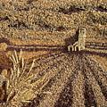 Prairie Harvest by Naomi Gerrard