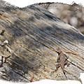 Prairie Lizard _ 1b by Walter Herrit