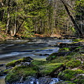 Prairie River Through The Cedars by Dale Kauzlaric
