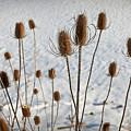 Prairie Seedheads by Steve Gadomski